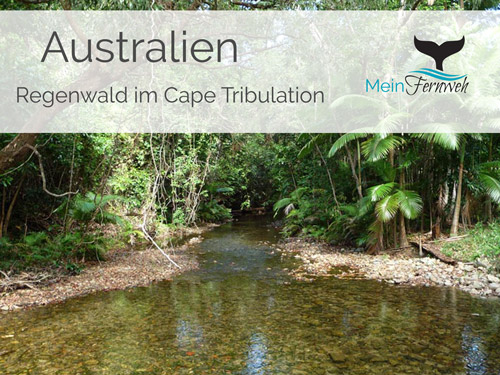 cape-tribulation