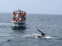 whalewatching-okinawa-japan